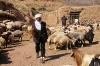 shepherd-iran