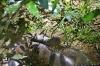 anaconda-ecuador
