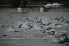 budapest-swim